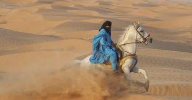 سوار بر اسب